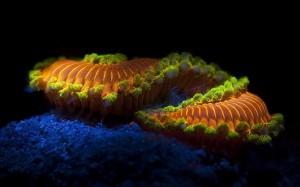 fluorescent_worm_ bahamas
