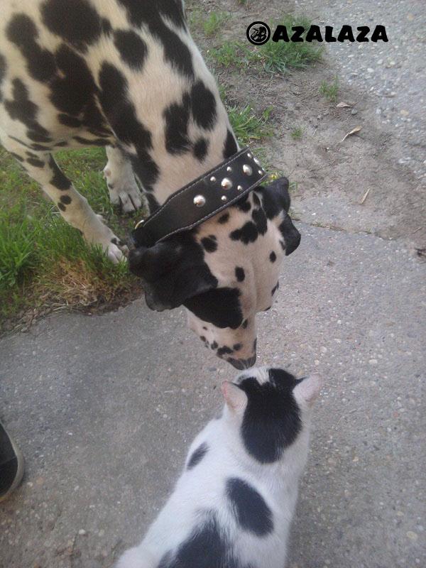 kutya_macska_barátság